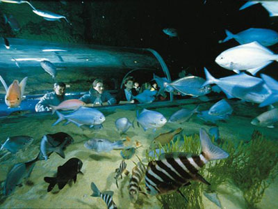 Kelly Tarlton's Underwater World