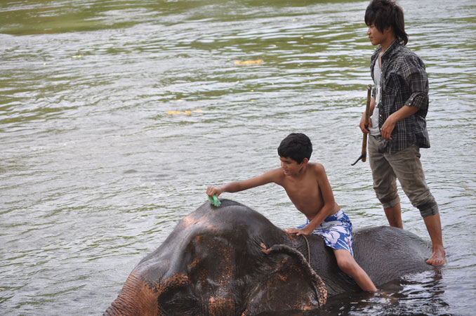 elephant-world--bathing-the-elephant